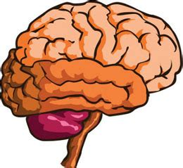 Compare Human Brain and the Computer - Essay Samples